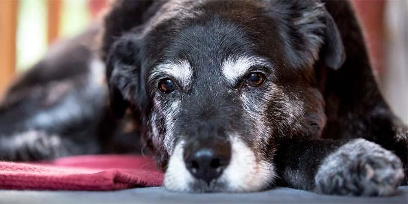cane anziano-8-800x400