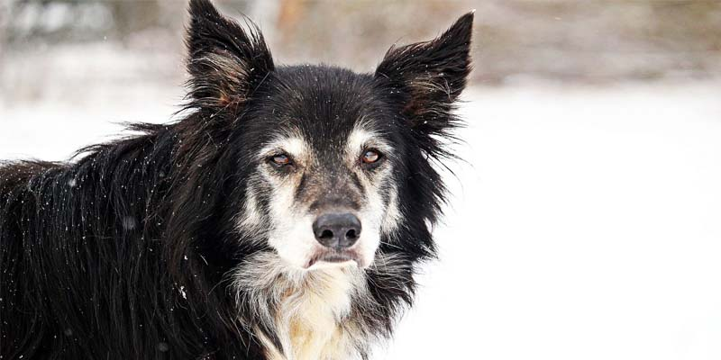 cane anziano-9-800x400