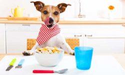 Cane con intolleranze alimentari? Una guida per gestire questa problematica dei nostri amici a 4 zampe
