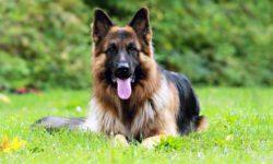 cane e territorio-1-800x400