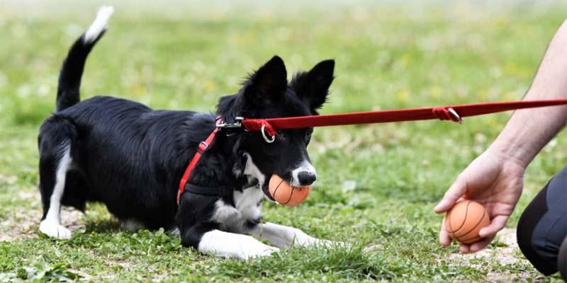 cane e territorio-10-800x400