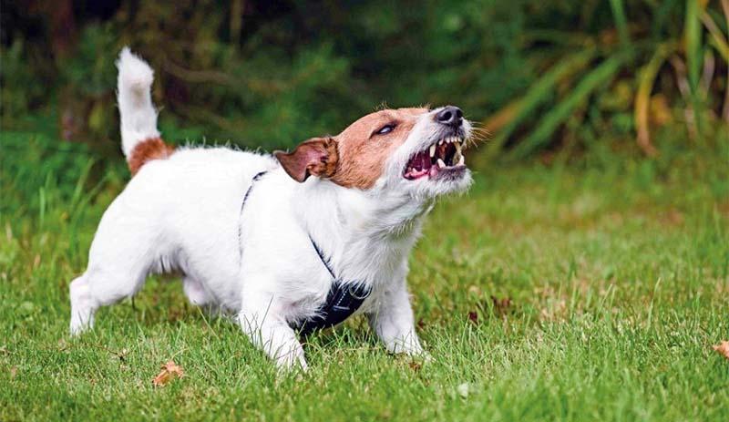 cane e territorio-2-800x400