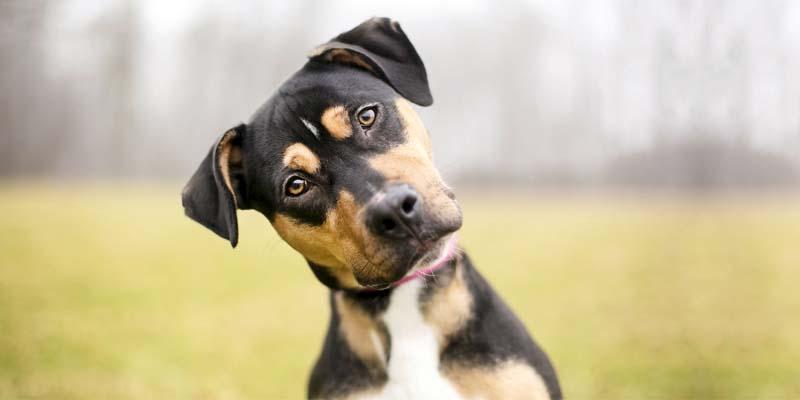 cane e territorio-3-800x400