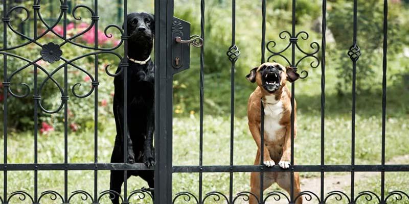 cane e territorio-5-800x400