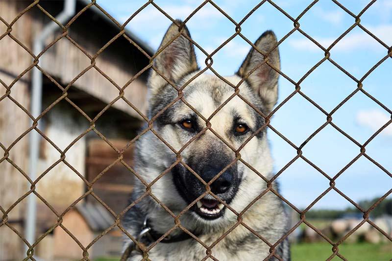 cane e territorio-6-800x400