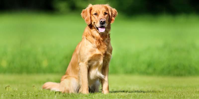 cane e territorio-7-800x400