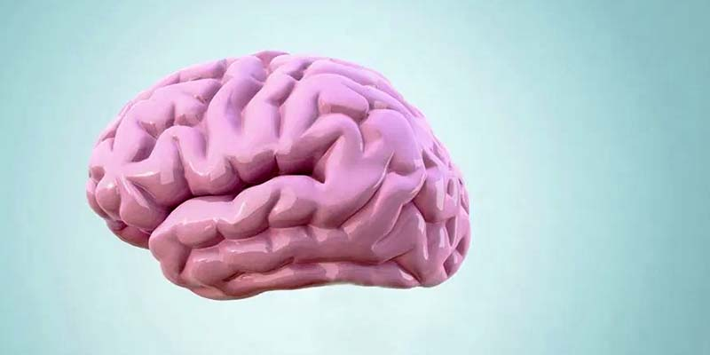 cervello-1-800x400