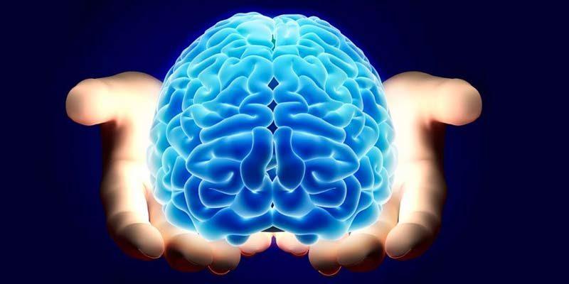 cervello-3-800x400