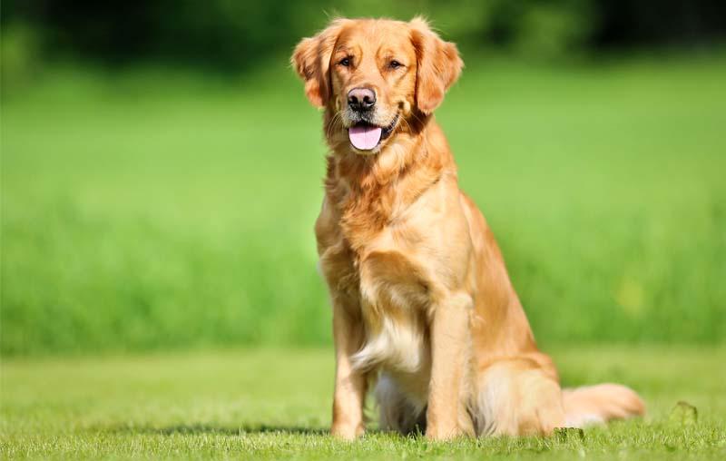 criteri per scegliere cane-1-800x400