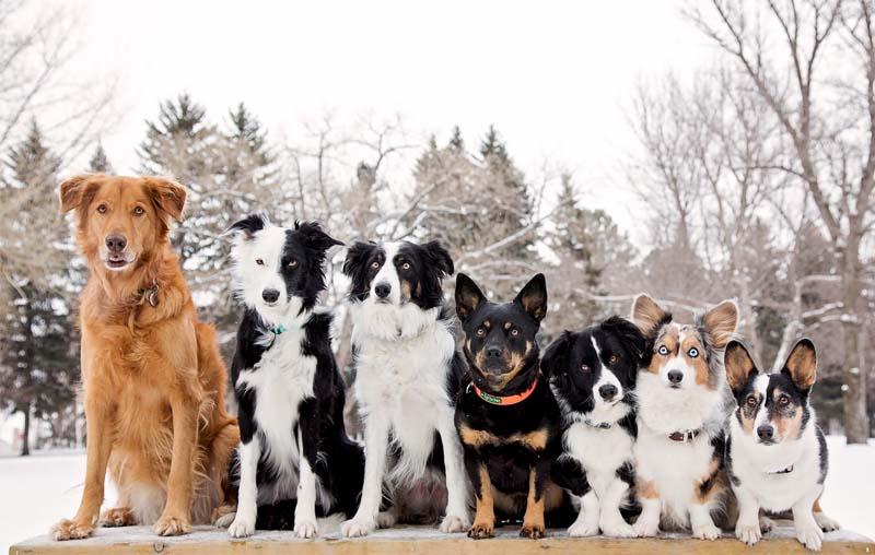 criteri per scegliere cane-2-800x400