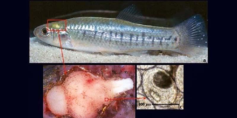 pesce-3b-800x400