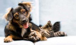 prendere cura cani e gatti-1-800x400