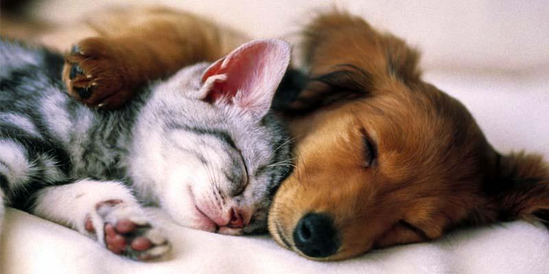 prendere cura cani e gatti-2-800x400