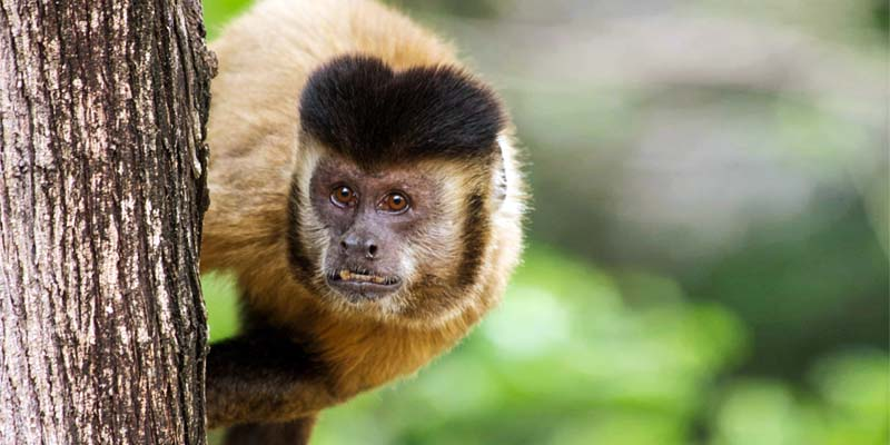 scimmia-3a-800x400