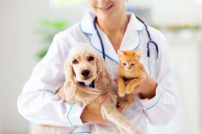 veterinario-3-800x400