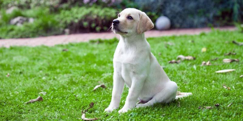 cane e puberta-9-800x400