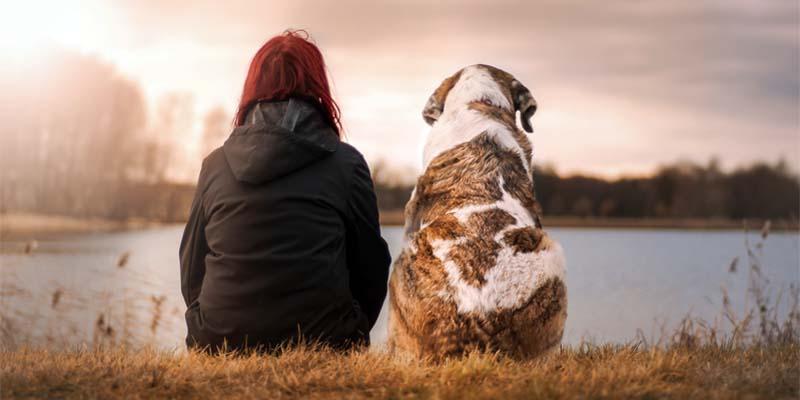 cane e uomo-5-800x400
