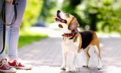 cane senza guinzaglio-1-800x400