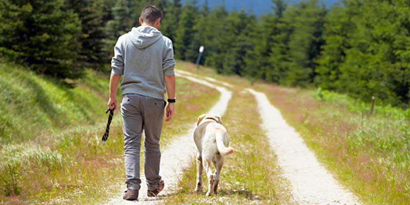 cane senza guinzaglio-2-800x400