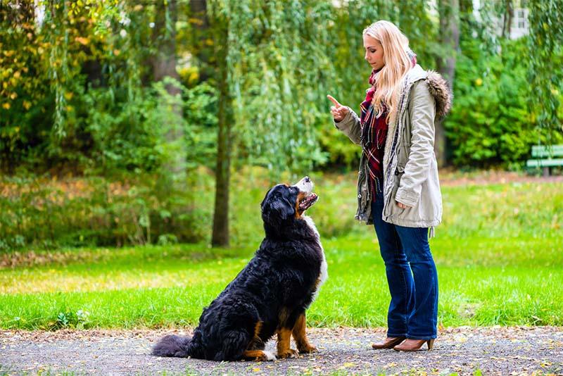 cane senza guinzaglio-3-800x400