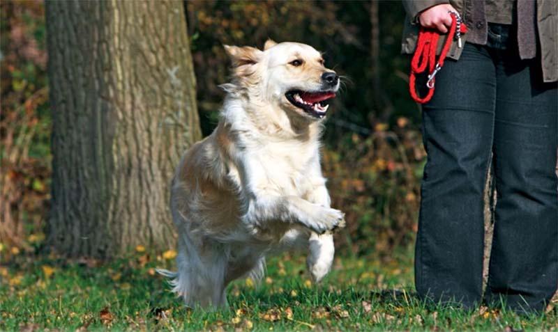 cane senza guinzaglio-7-800x400