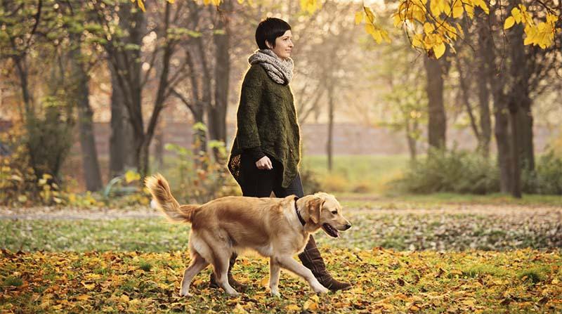 cane senza guinzaglio-8-800x400