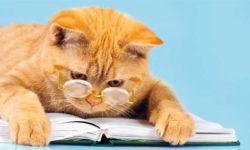 educazione gatto-1-800x400