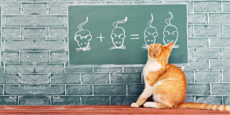 educazione gatto-2-800x400