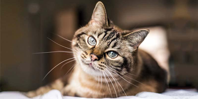 educazione gatto-5-800x400