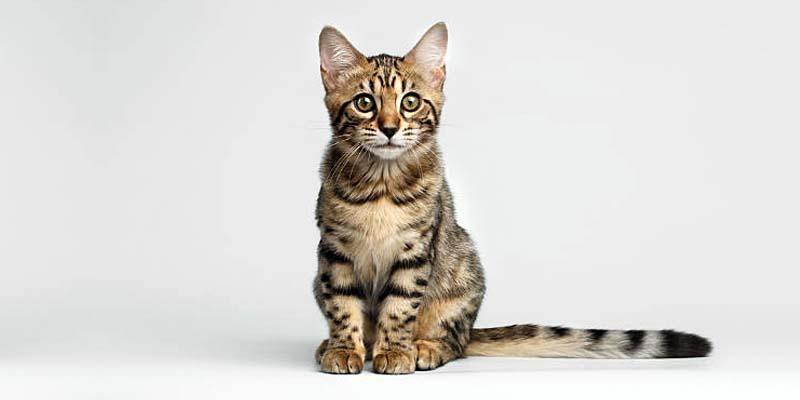 educazione gatto-6-800x400