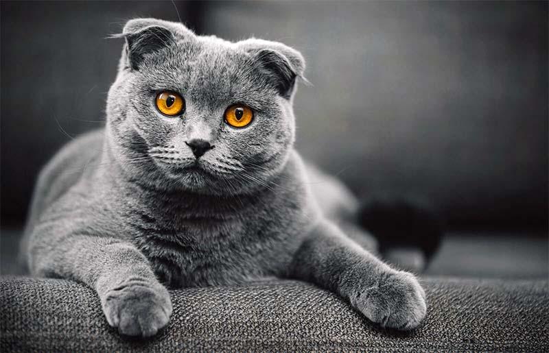 educazione gatto-7-800x400