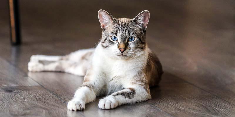 educazione gatto-8-800x400