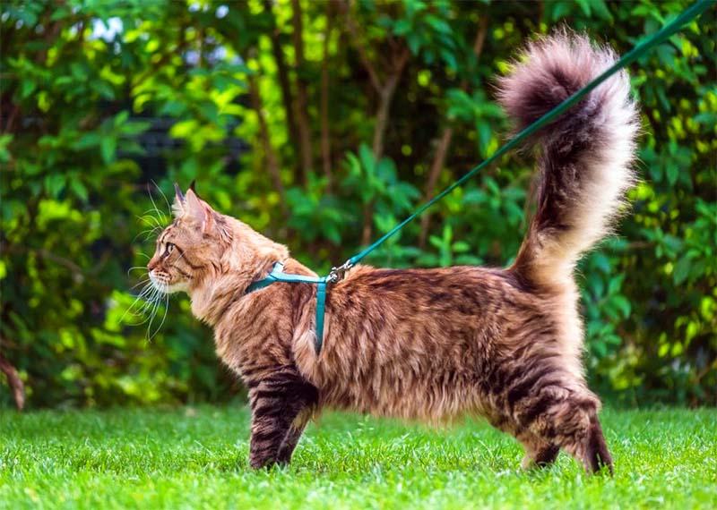 gatto al guinzaglio-3-800x400