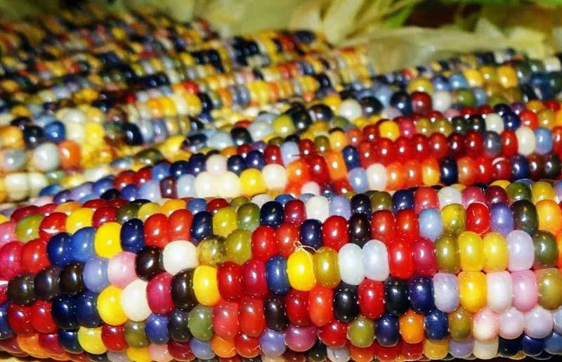 mais arcobaleno-800x400