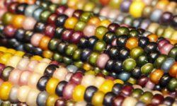verdure colorate-1-800x400