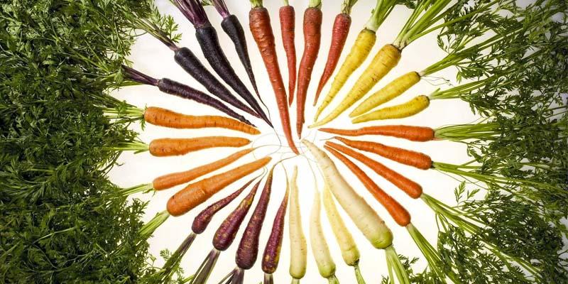 verdure colorate-2-800x400