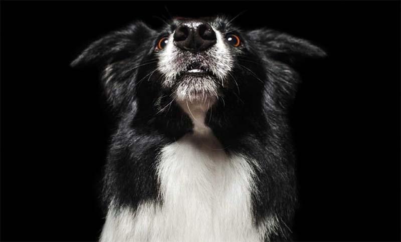 animali-cane-3-800x400