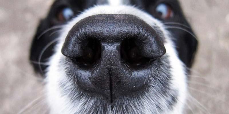 animali-cane-4-800x400