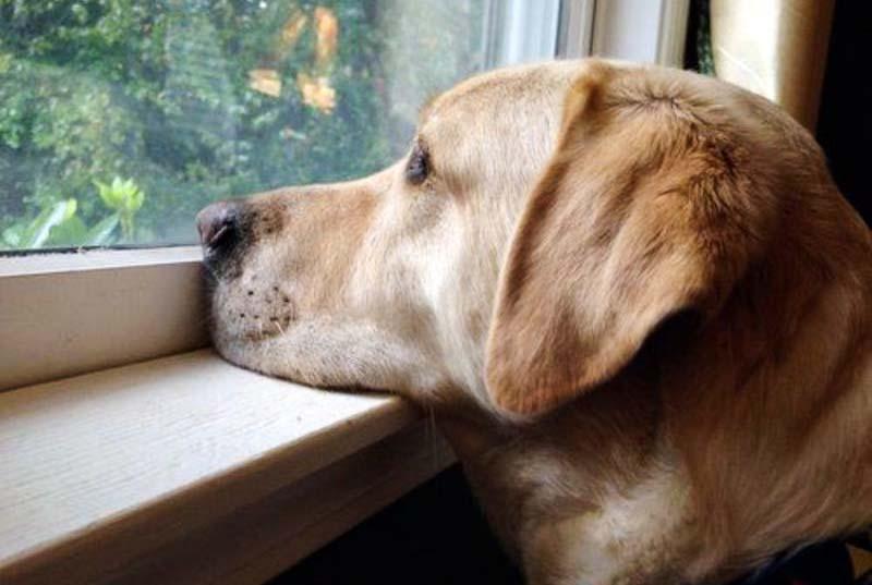 animali-cane aspetta-10-800x400