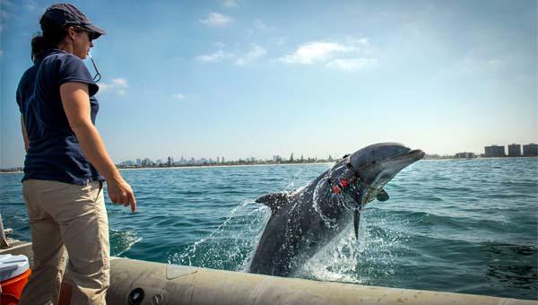 animali-delfini-9-800x400