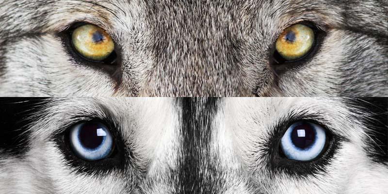evoluzione cane-1-800x400