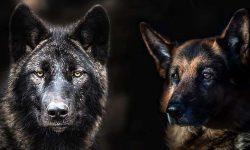 evoluzione cane-3-800x400