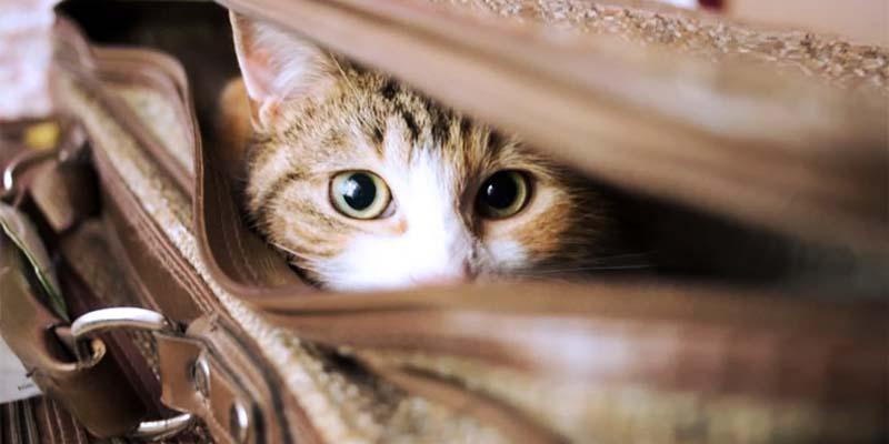 gatto in viaggio-1-800x400