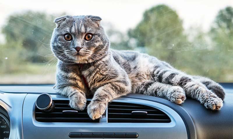 gatto in viaggio-11-800x400