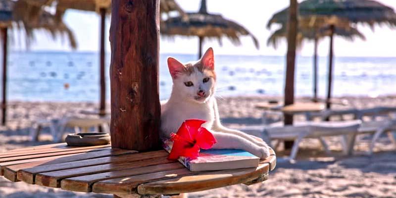 gatto in viaggio-12-800x400