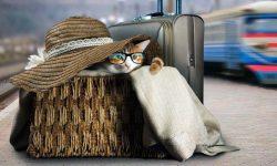 gatto in viaggio-2-800x400