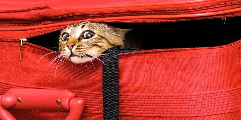 gatto in viaggio-3-800x400
