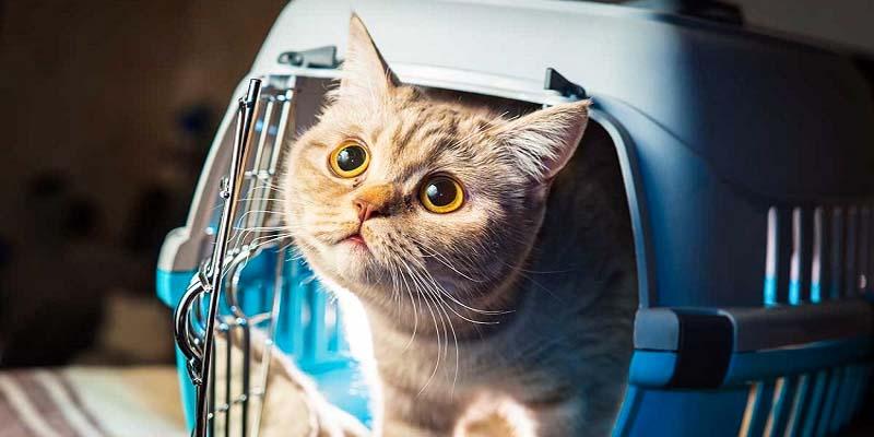gatto in viaggio-4-800x400