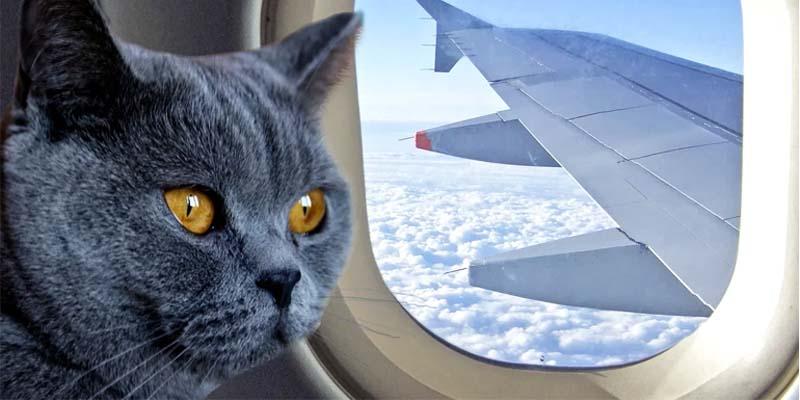 gatto in viaggio-5-800x400