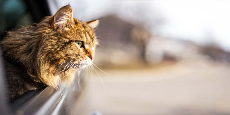 gatto in viaggio-6-800x400